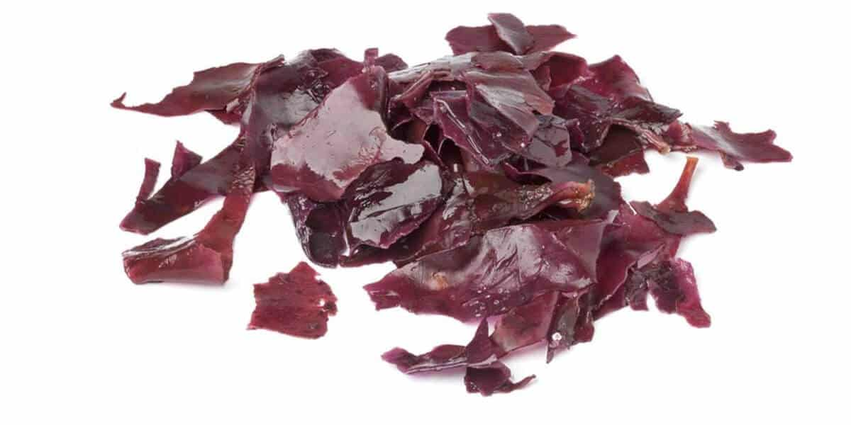 Healthy Food for Kids: Dulse